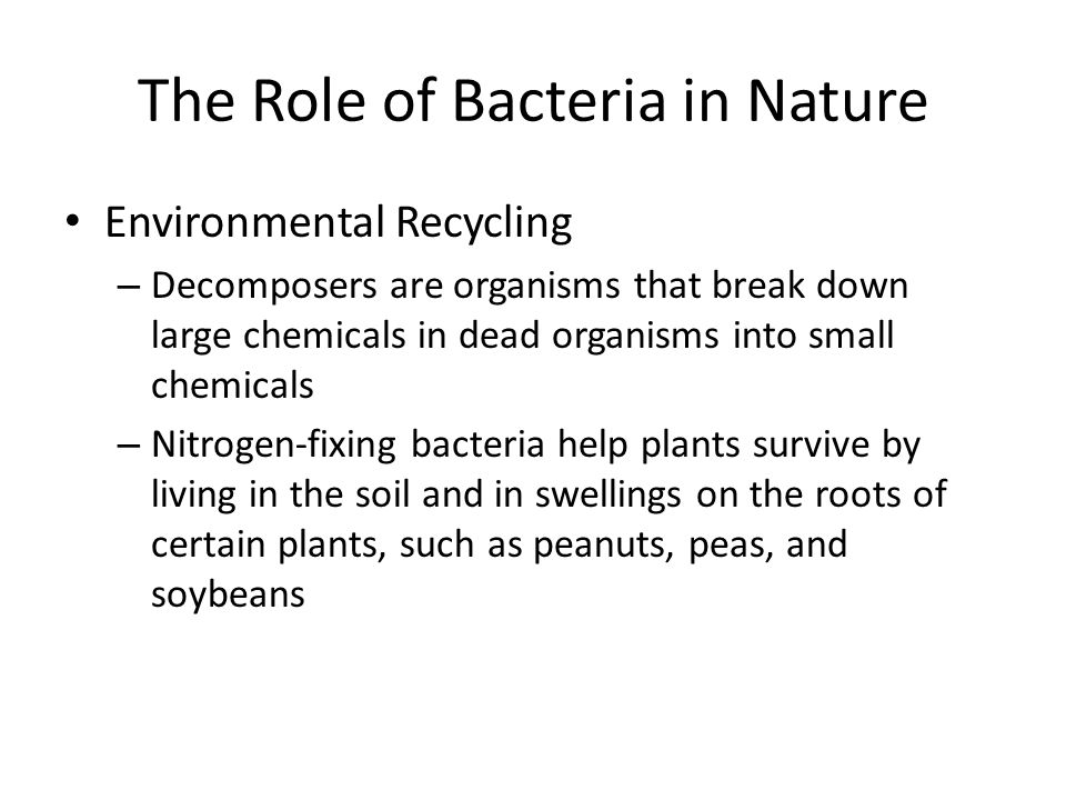 The Role of Bacteria in Nature