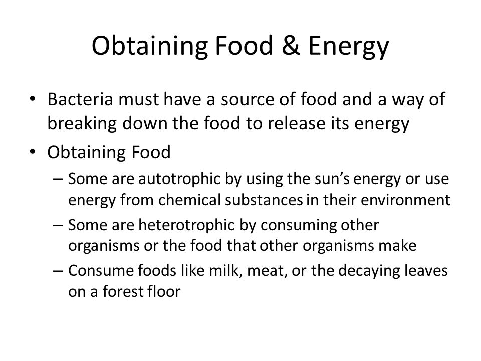 Obtaining Food & Energy