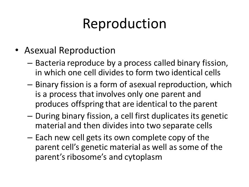 Reproduction Asexual Reproduction