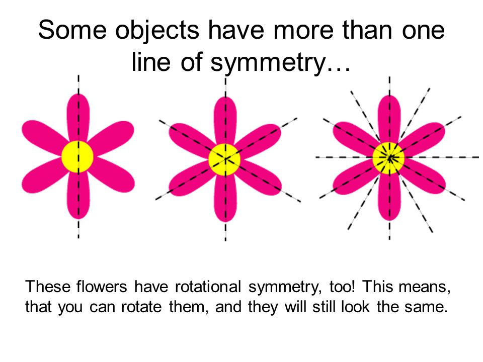 Some objects have more than one line of symmetry…