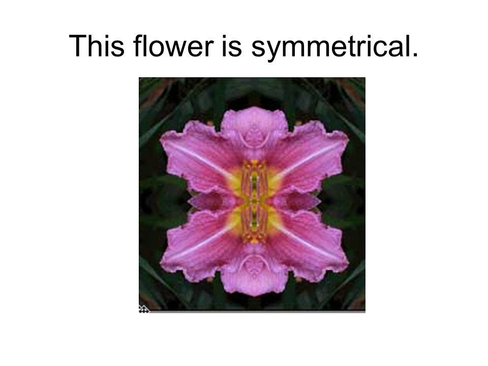 This flower is symmetrical.