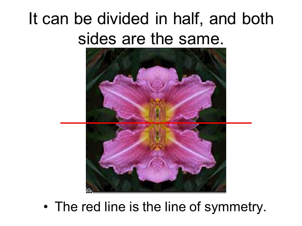 It can be divided in half, and both sides are the same.