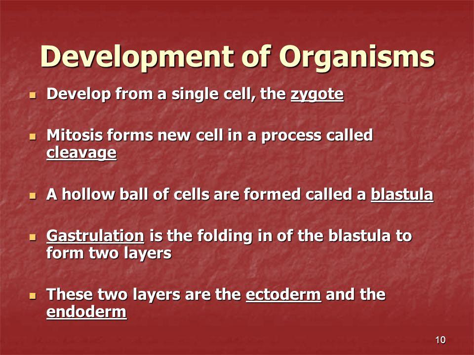Development of Organisms
