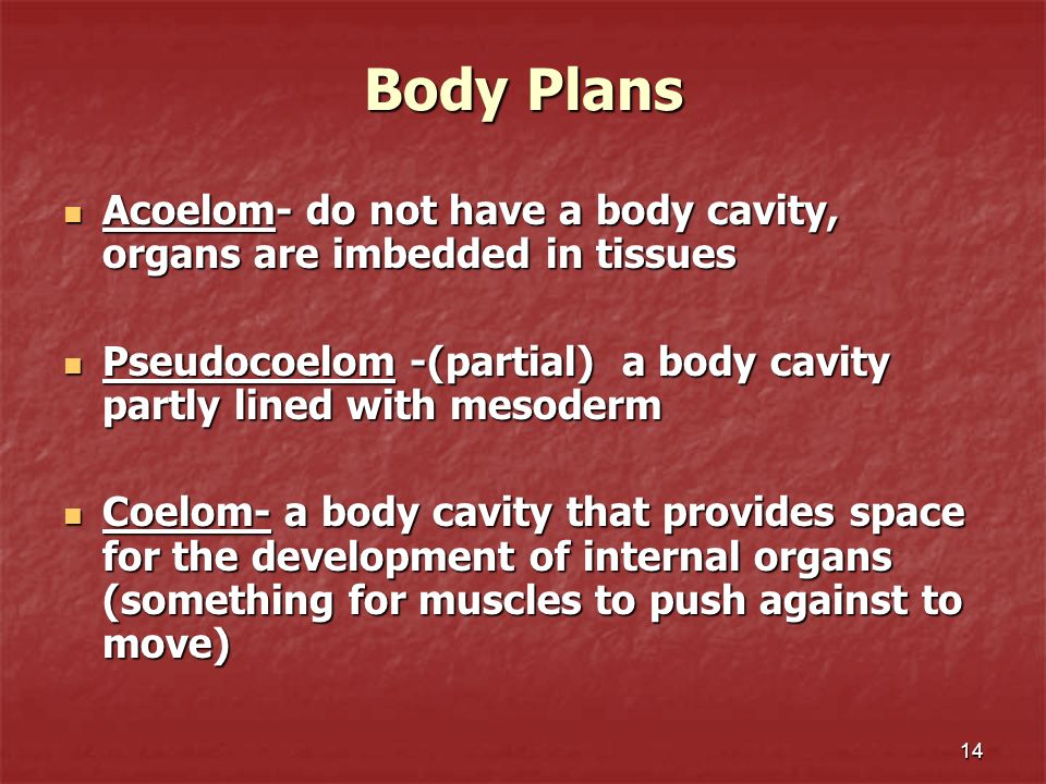 Body Plans Acoelom- do not have a body cavity, organs are imbedded in tissues. Pseudocoelom -(partial) a body cavity partly lined with mesoderm.