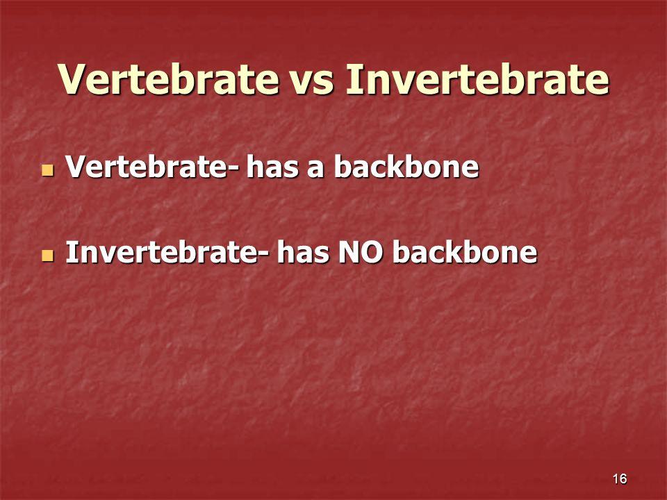 Vertebrate vs Invertebrate