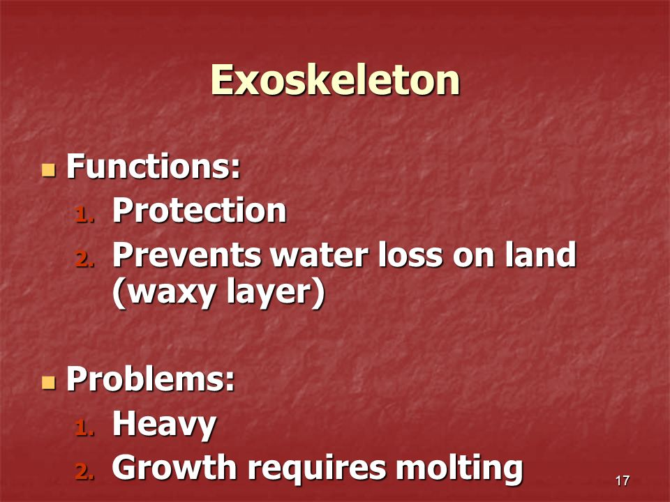 Exoskeleton Functions: Protection