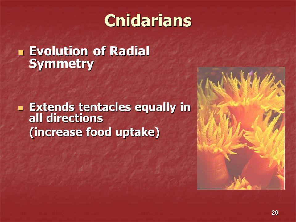 Cnidarians Evolution of Radial Symmetry