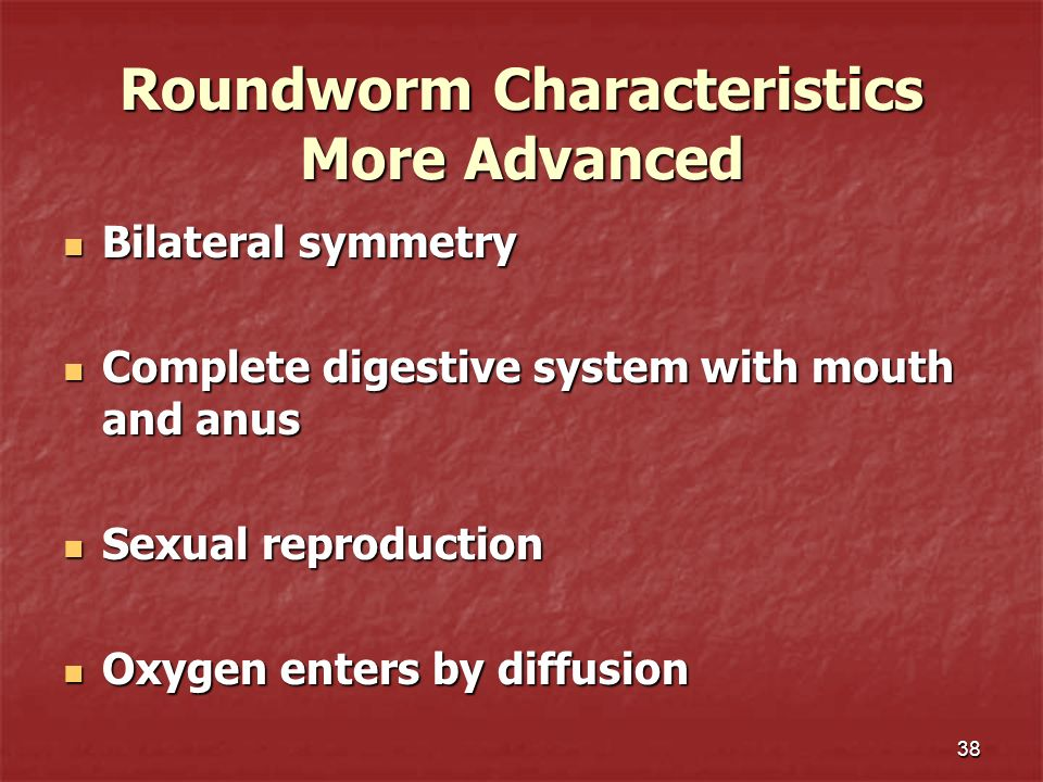 Roundworm Characteristics More Advanced