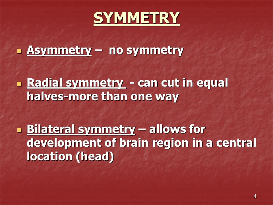SYMMETRY Asymmetry – no symmetry