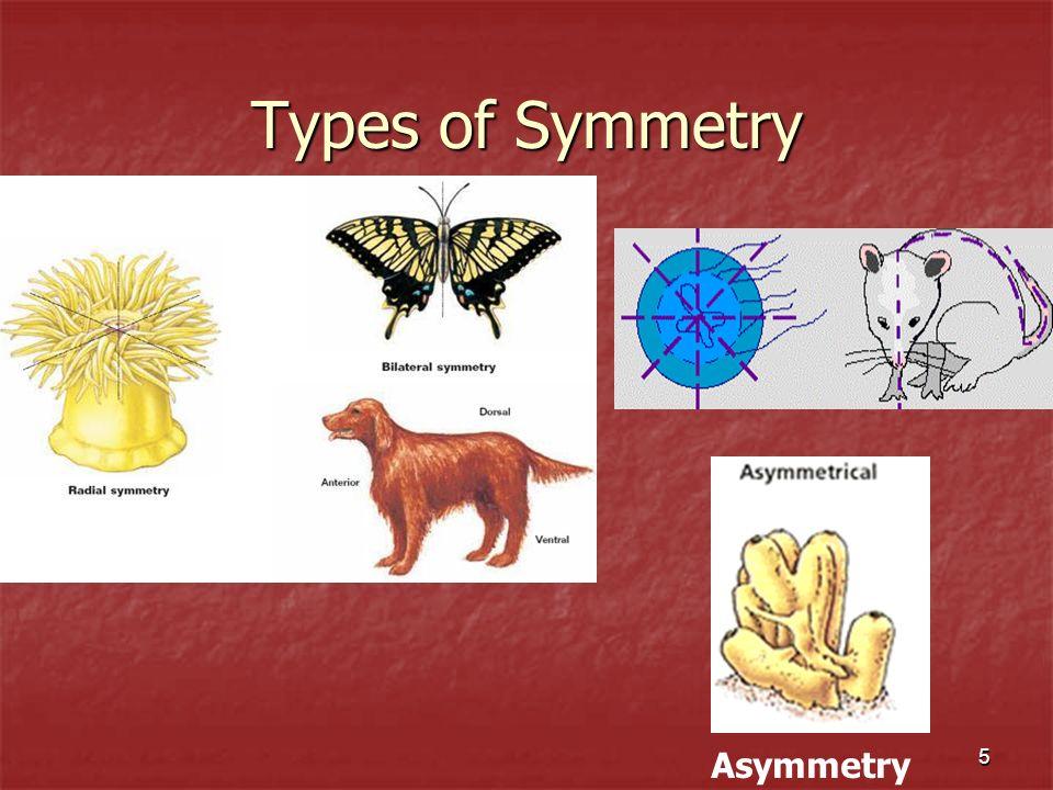 Types of Symmetry Asymmetry