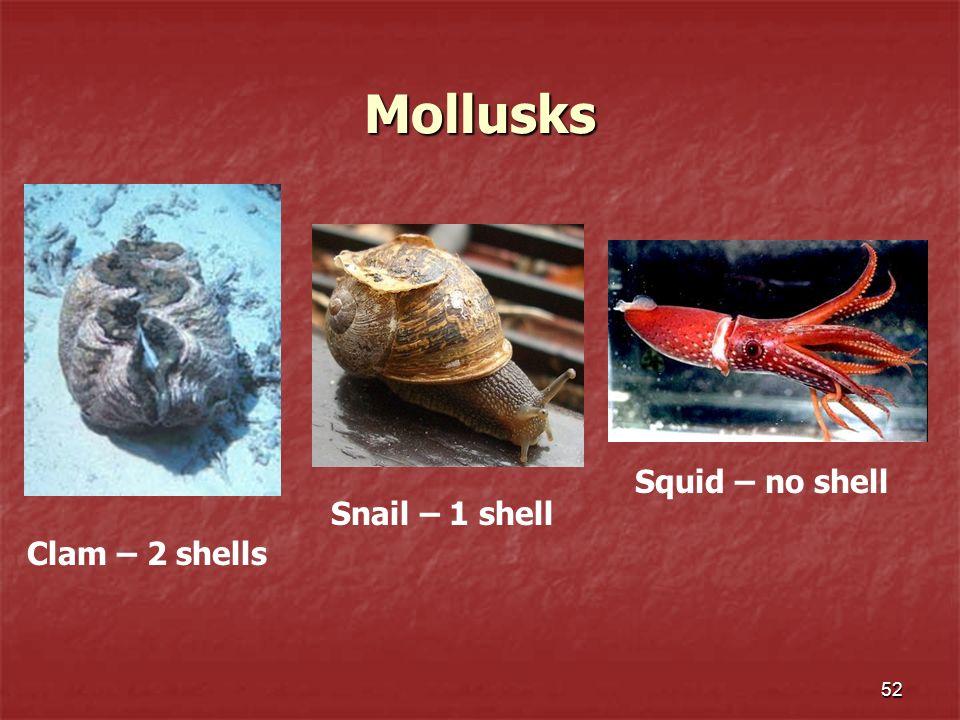 Mollusks Squid – no shell Snail – 1 shell Clam – 2 shells