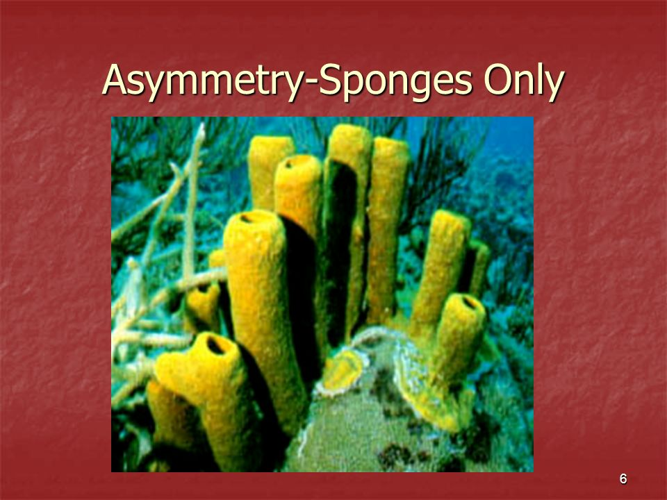 Asymmetry-Sponges Only