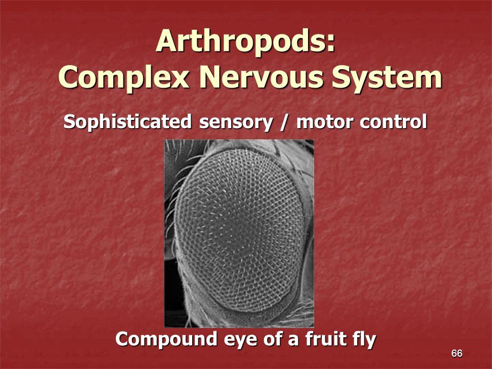 Arthropods: Complex Nervous System