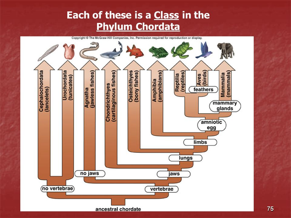 Each of these is a Class in the Phylum Chordata