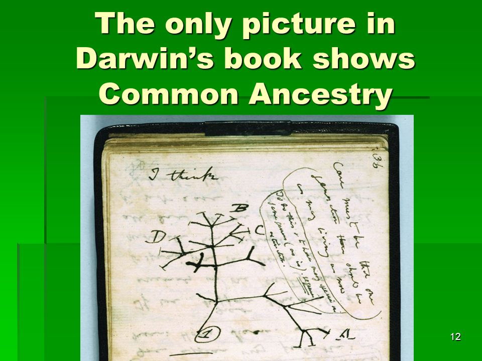 The only picture in Darwin's book shows Common Ancestry
