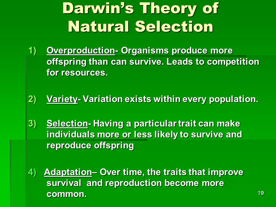 Darwin's Theory of Natural Selection