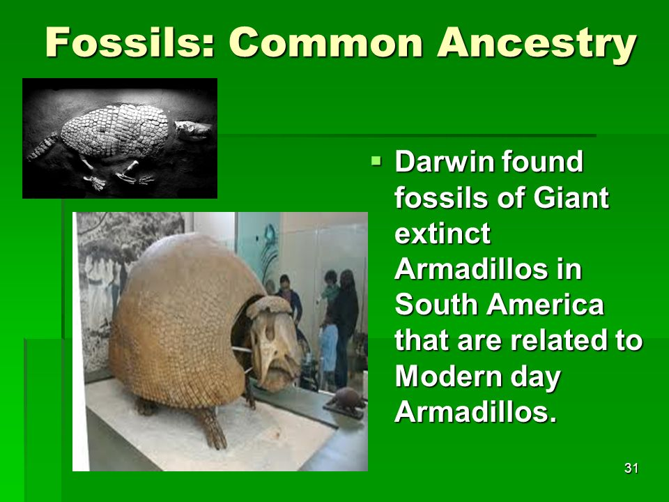 Fossils: Common Ancestry