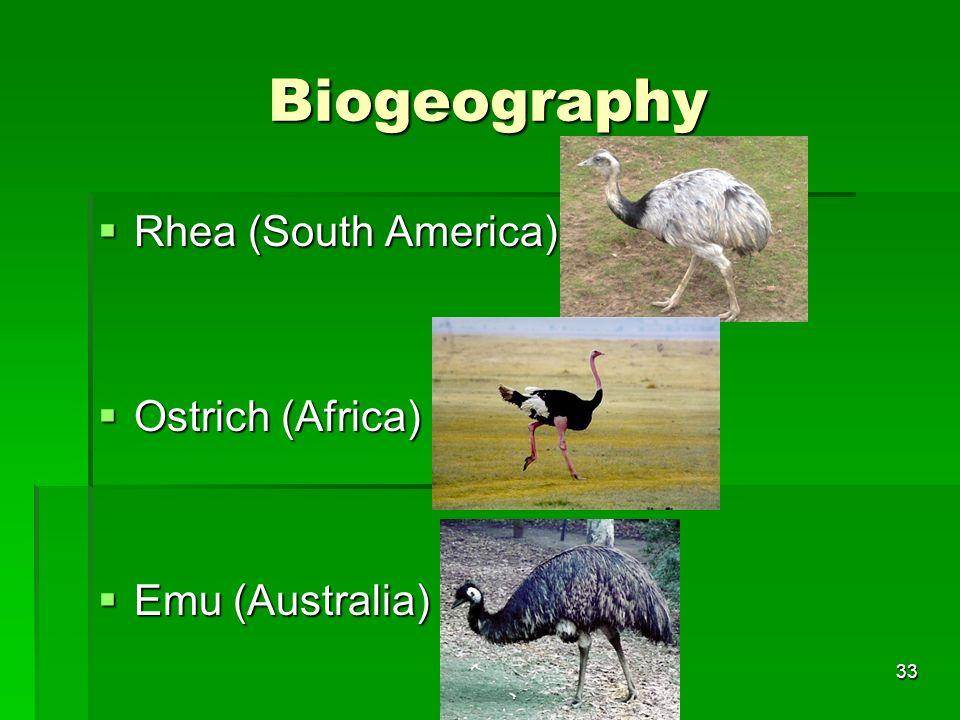 Biogeography Rhea (South America) Ostrich (Africa) Emu (Australia)