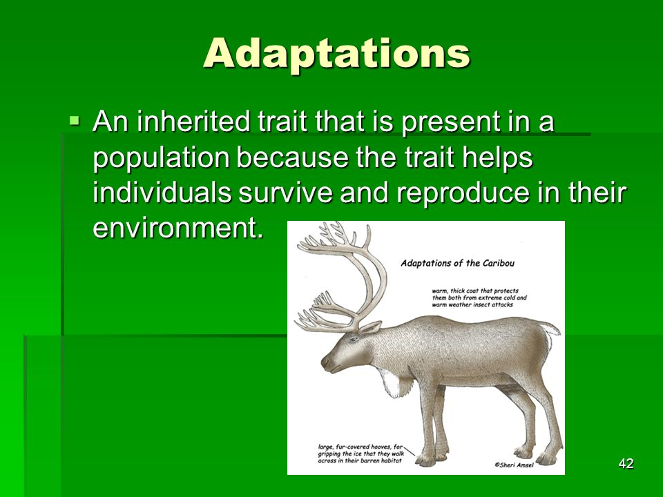 Adaptations An inherited trait that is present in a population because the trait helps individuals survive and reproduce in their environment.