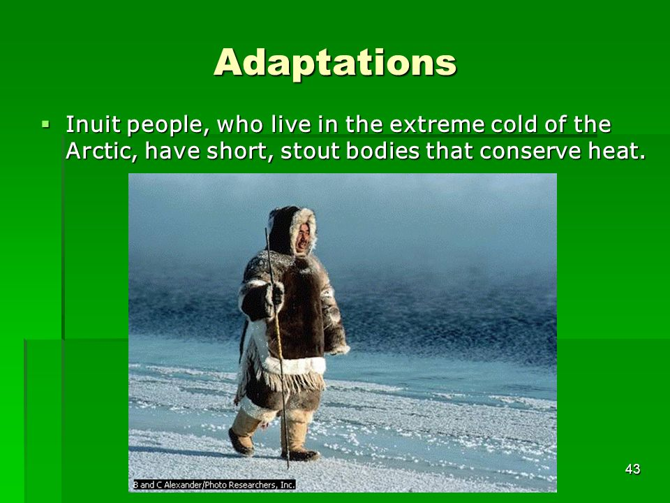 Adaptations Inuit people, who live in the extreme cold of the Arctic, have short, stout bodies that conserve heat.