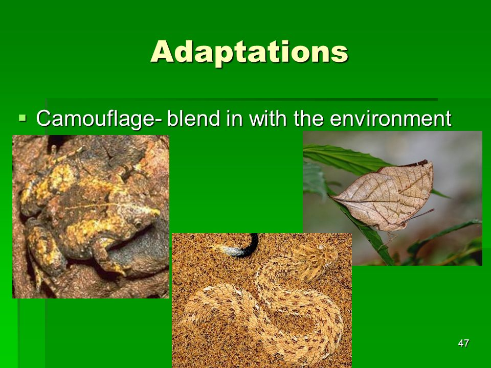 Adaptations Camouflage- blend in with the environment