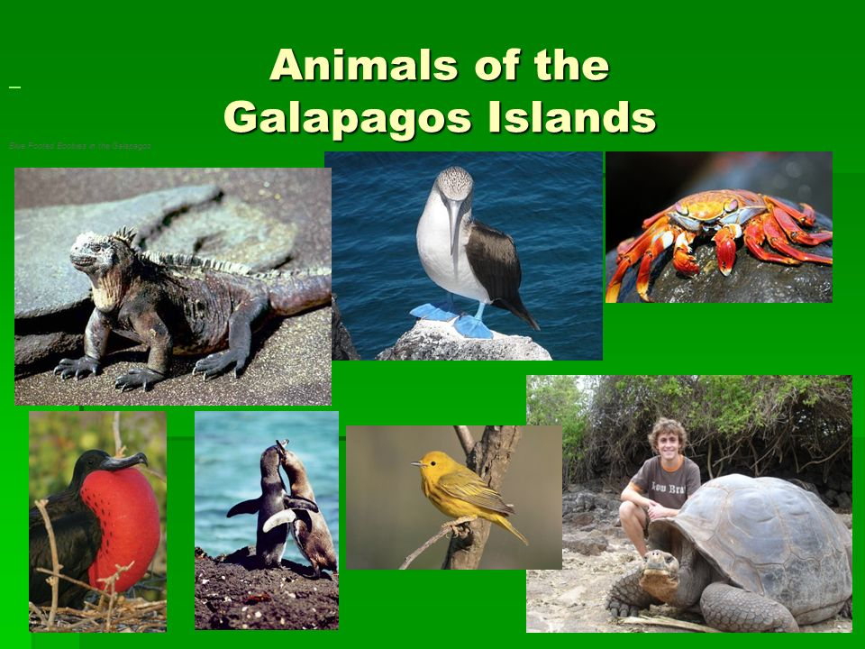 Animals of the Galapagos Islands