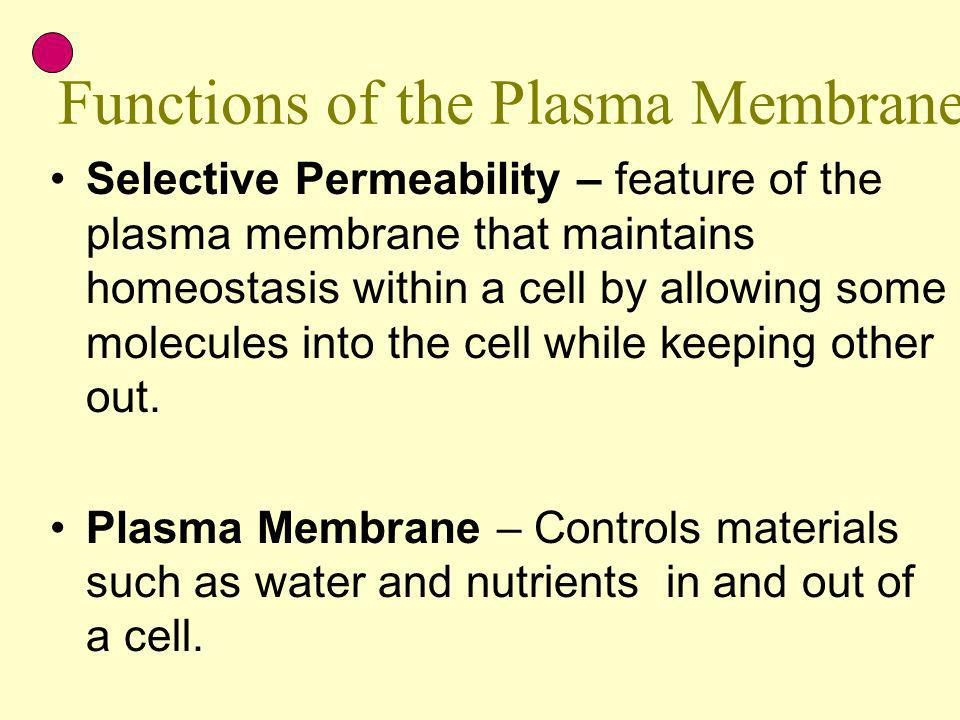 Functions of the Plasma Membrane
