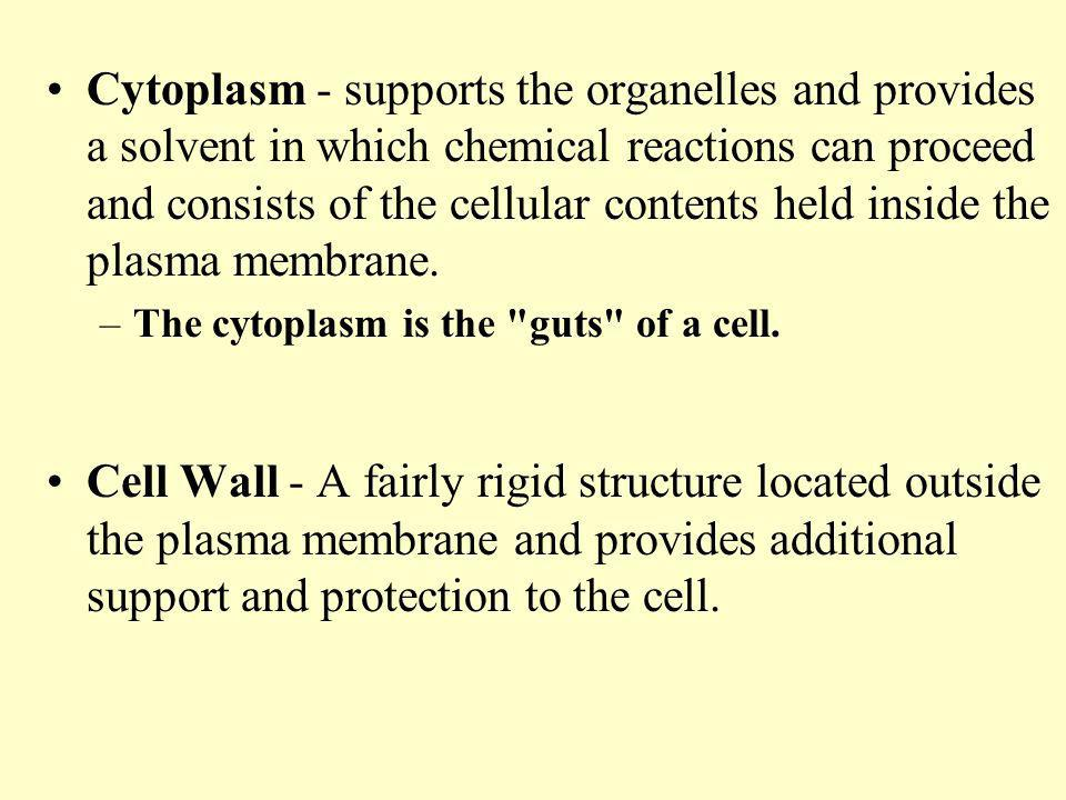 Cytoplasm - supports the organelles and provides a solvent in which chemical reactions can proceed and consists of the cellular contents held inside the plasma membrane.