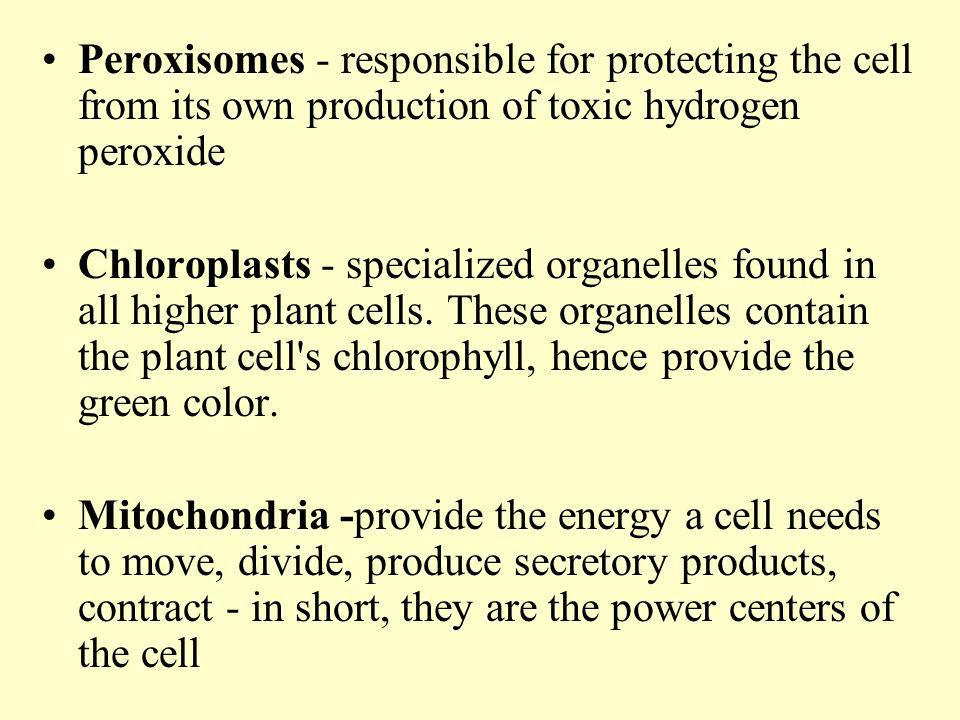 Peroxisomes - responsible for protecting the cell from its own production of toxic hydrogen peroxide
