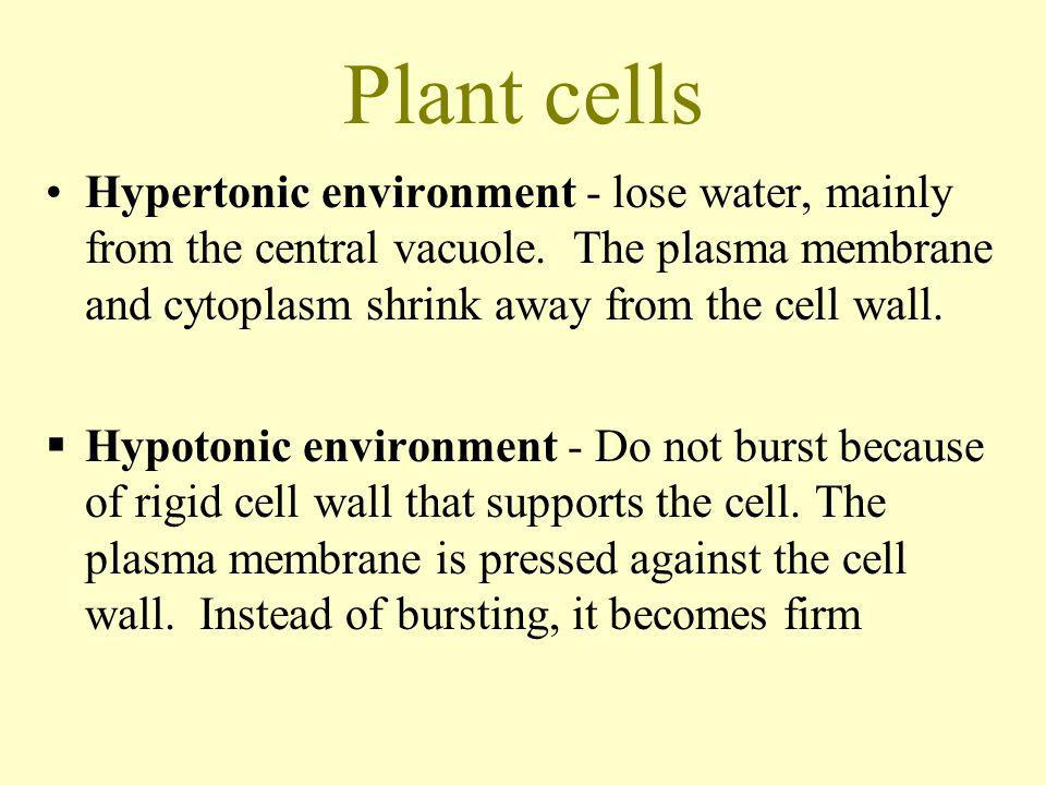 Plant cells Hypertonic environment - lose water, mainly from the central vacuole. The plasma membrane and cytoplasm shrink away from the cell wall.