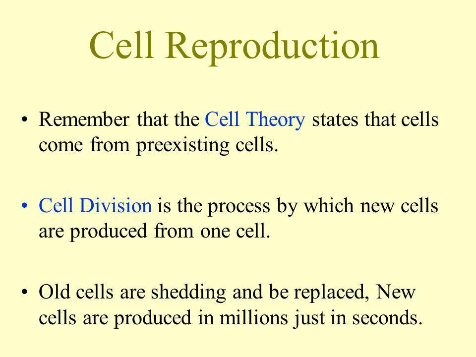 Cell Reproduction Remember that the Cell Theory states that cells come from preexisting cells.