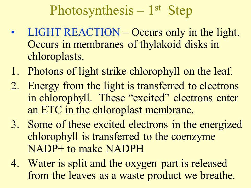 Photosynthesis – 1st Step