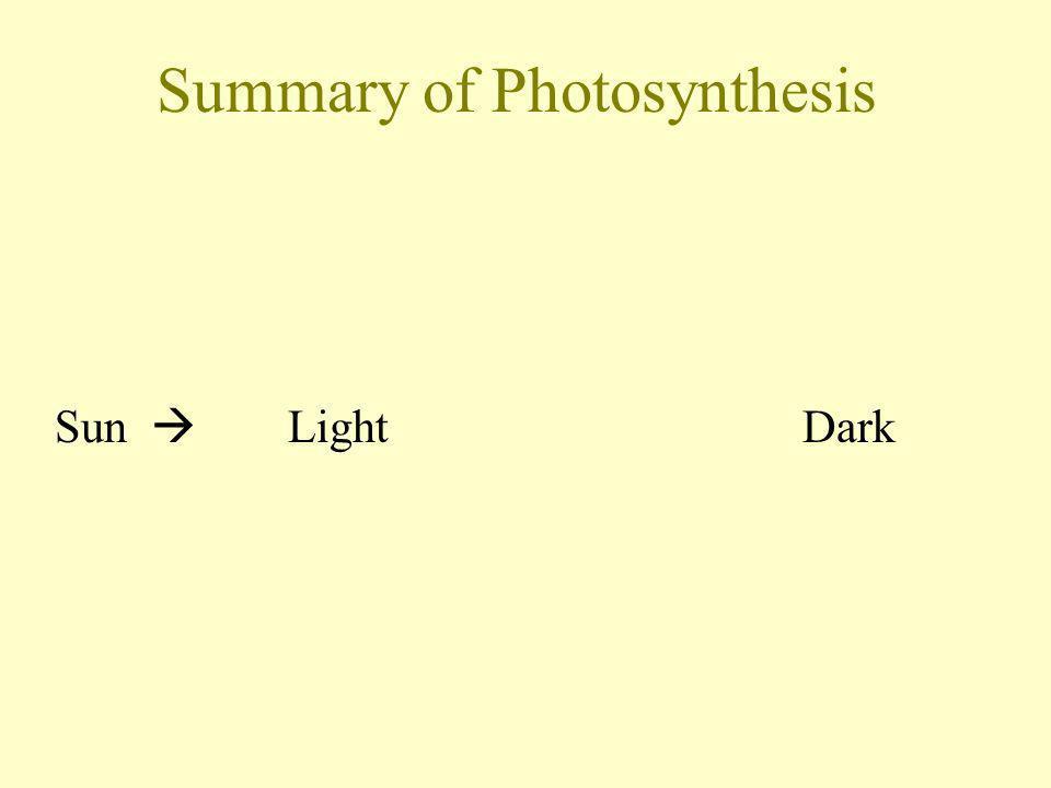 Summary of Photosynthesis