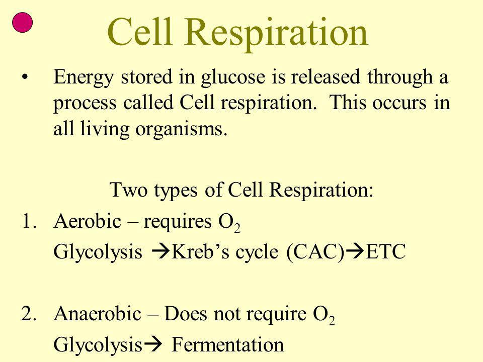 Two types of Cell Respiration: