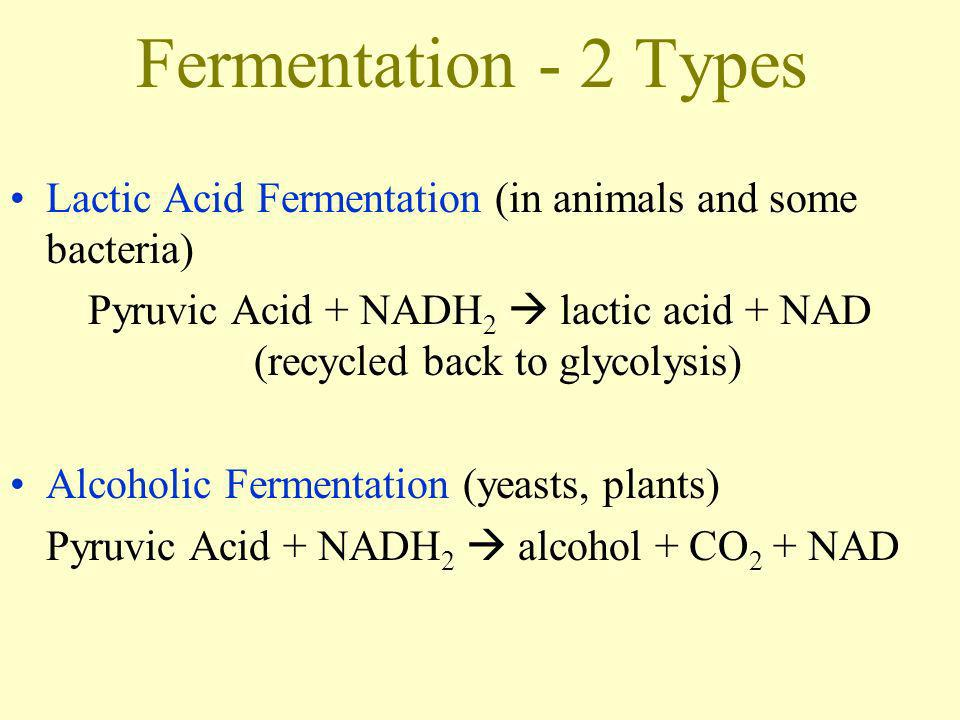 Pyruvic Acid + NADH2  lactic acid + NAD (recycled back to glycolysis)