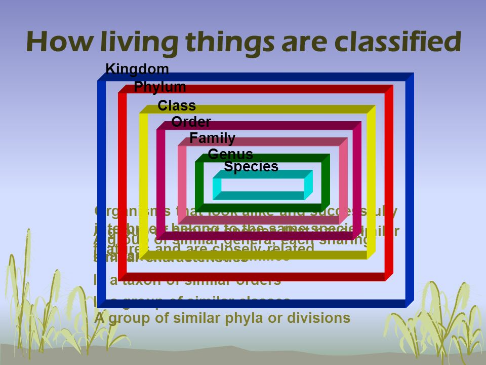 How living things are classified