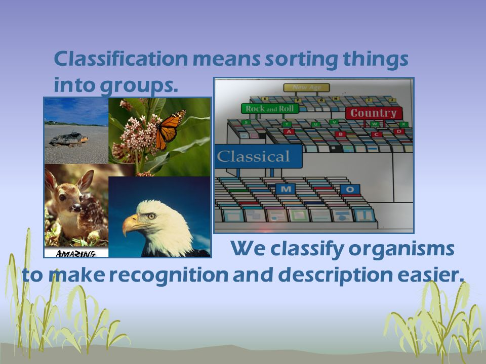 We classify organisms Classification means sorting things into groups.
