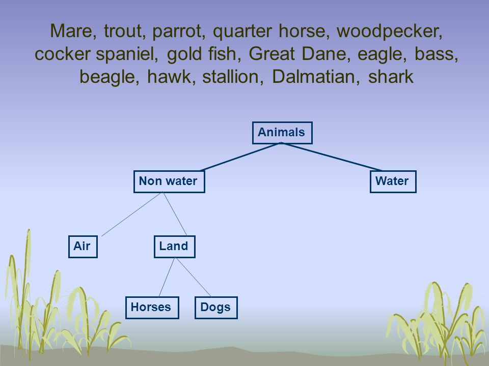Mare, trout, parrot, quarter horse, woodpecker, cocker spaniel, gold fish, Great Dane, eagle, bass, beagle, hawk, stallion, Dalmatian, shark