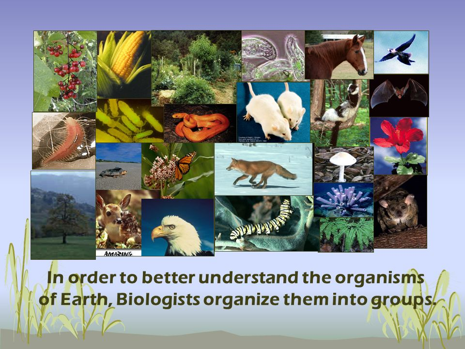 In order to better understand the organisms