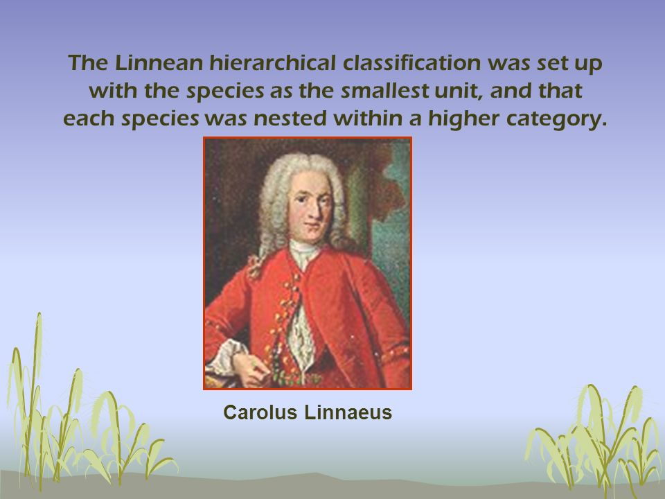 The Linnean hierarchical classification was set up with the species as the smallest unit, and that each species was nested within a higher category.