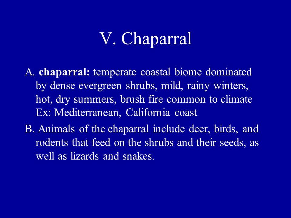 V. Chaparral