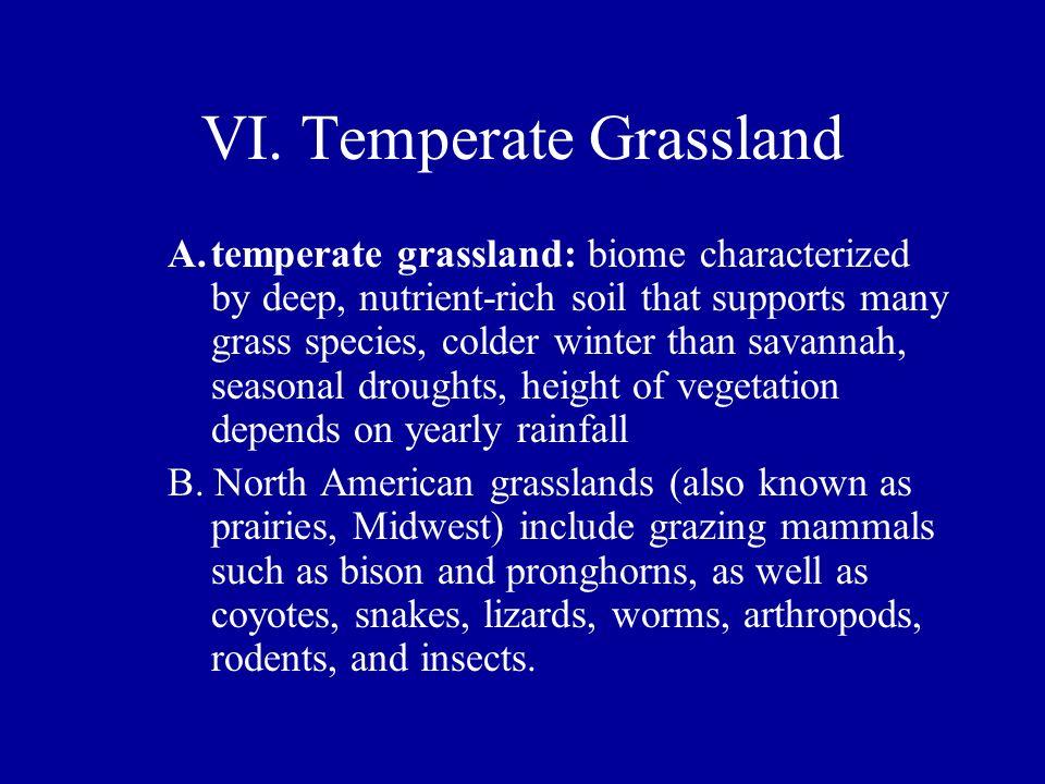 VI. Temperate Grassland
