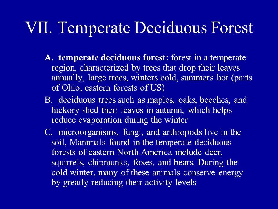 VII. Temperate Deciduous Forest