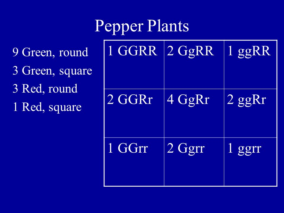 Pepper Plants 1 GGRR 2 GgRR 1 ggRR 2 GGRr 4 GgRr 2 ggRr 1 GGrr 2 Ggrr