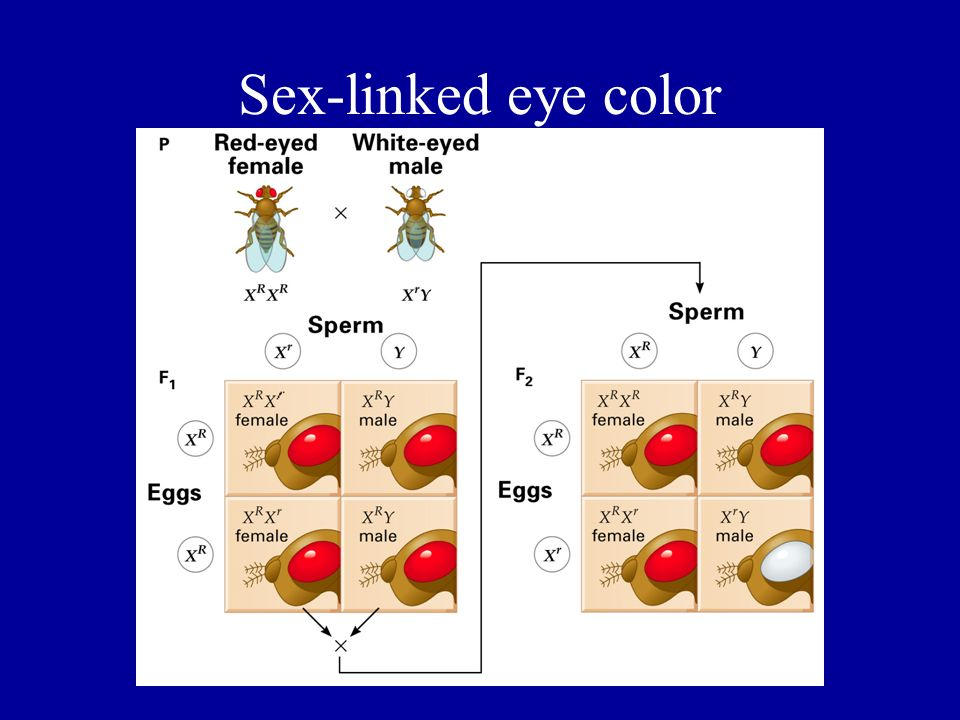 Sex-linked eye color