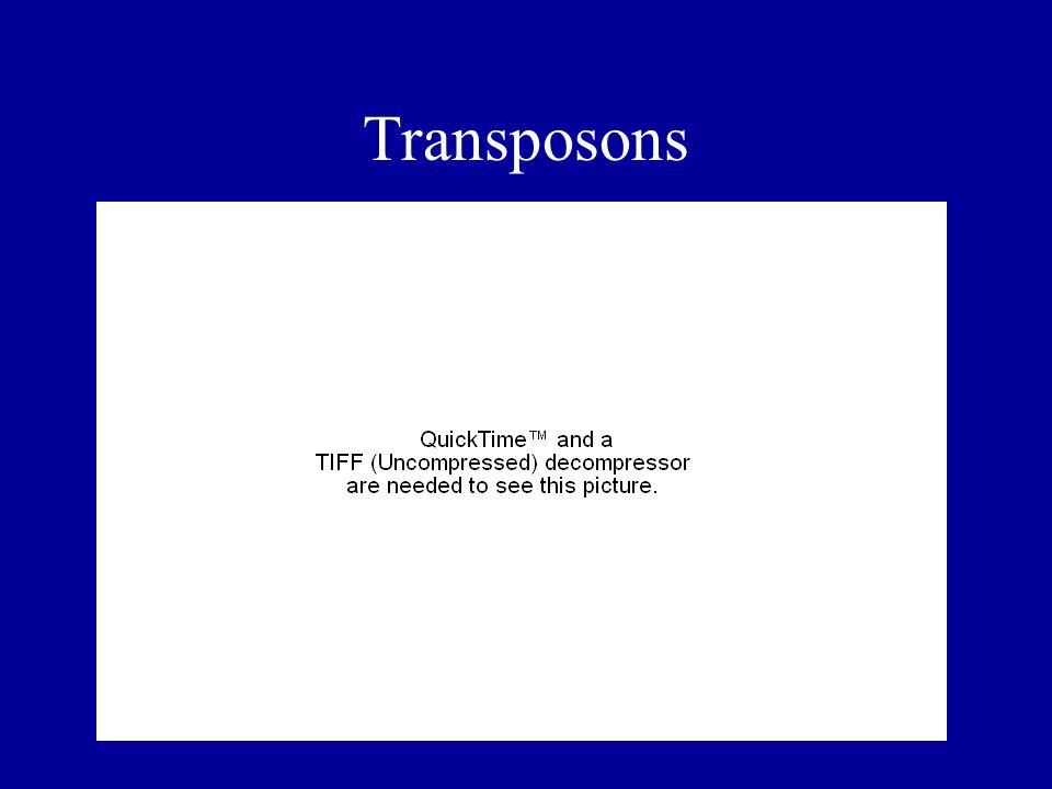 Transposons