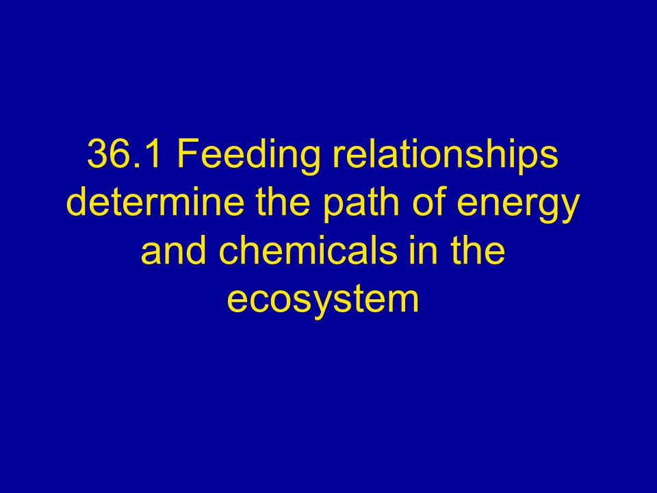 36.1 Feeding relationships determine the path of energy and chemicals in the ecosystem