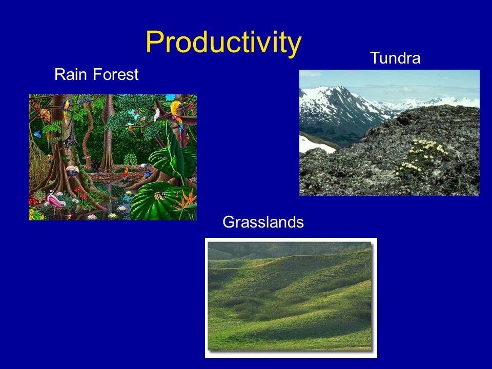 Productivity Tundra Rain Forest Grasslands