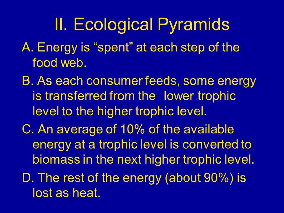 II. Ecological Pyramids