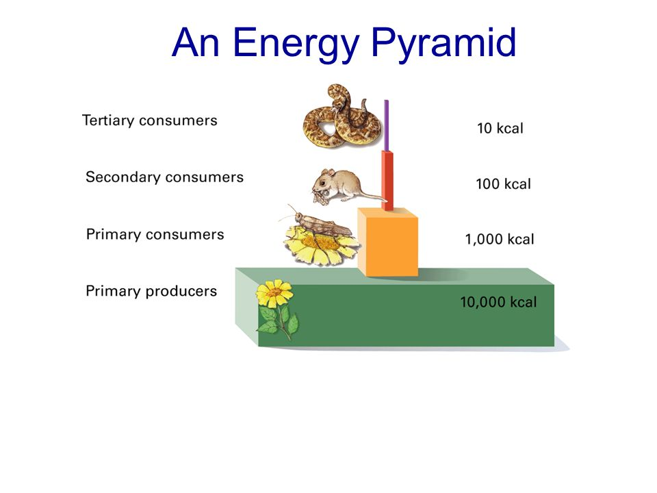 An Energy Pyramid